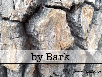 Tree Identification by Bark