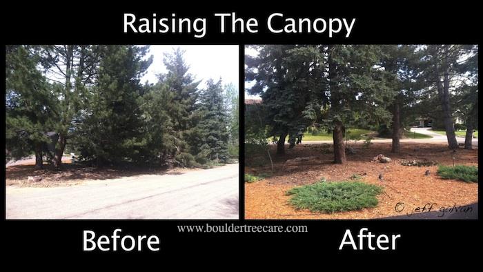 Raising the Canopy