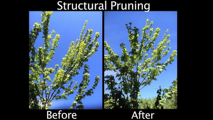 Structural Pruning - Before & After