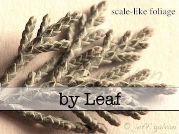 Tree Identification by Leaf
